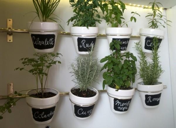 Plantas Para La Cocina | Hierbas Aromaticas En La Cocinacocina Caribe Cocina Caribe