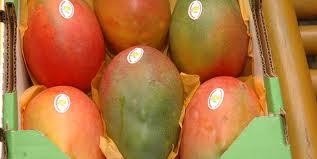 Preparan la Expo Mango 2014