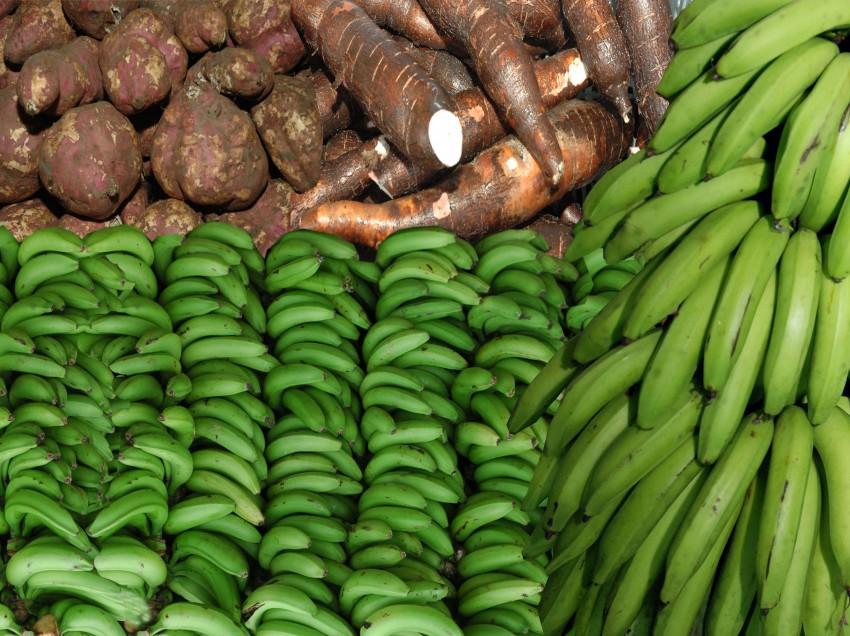 Los productos endémicos, el desarrollo y la culinaria