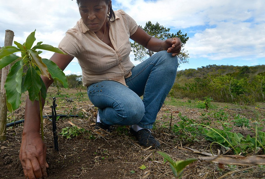 FAO: Pobreza femenina en América Latina ha aumentado en las últimas décadas